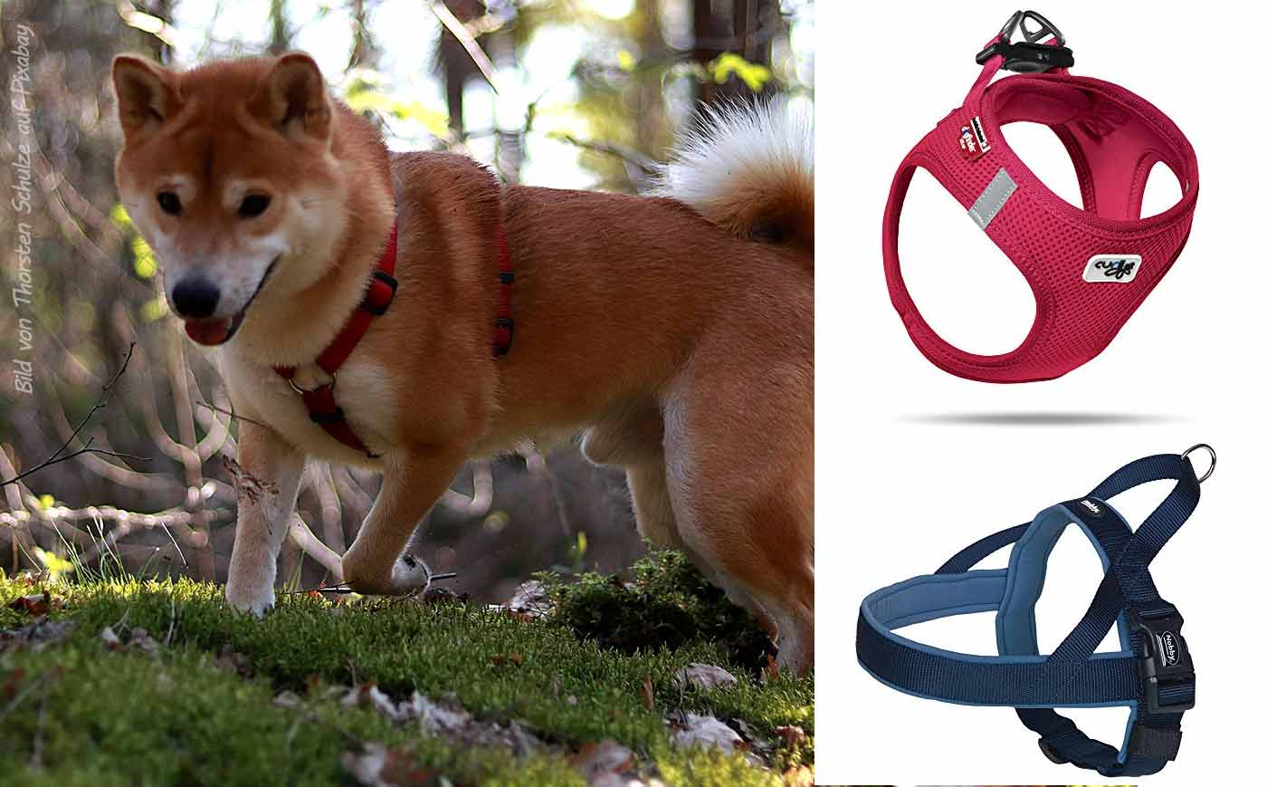 Die besten Shiba Inu Hundegeschirre & Welpengeschirre